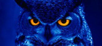 Blue Owl Wallpaper