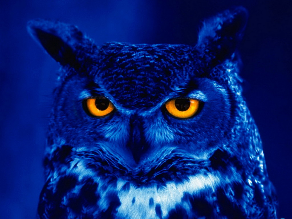 Blue Owl HD