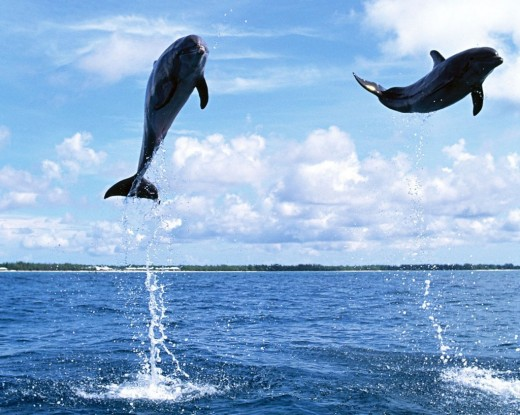 The Amazing Dolphins