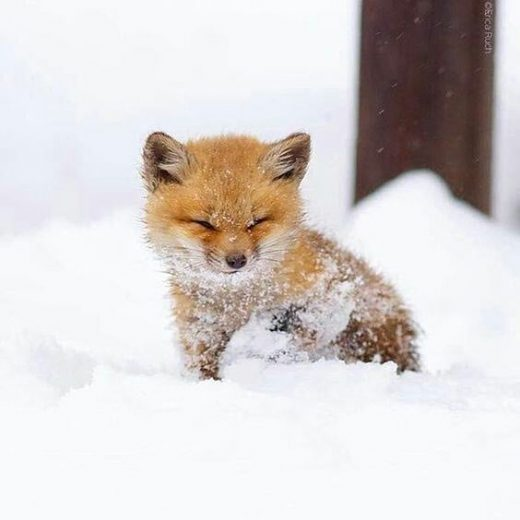 Baby Animals That Can Save Your Gloomy Day