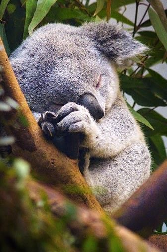 Pinterest Monday Linky – Cute Baby Animals