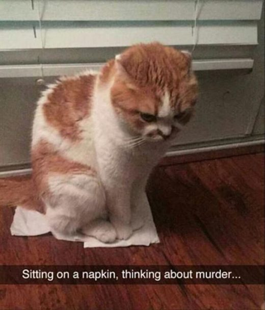25 Funny Animal Memes Because Ha ha HoHo Hee Hee