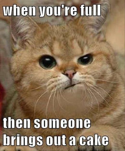 29 Funny Animal Pics for Your Wednesday