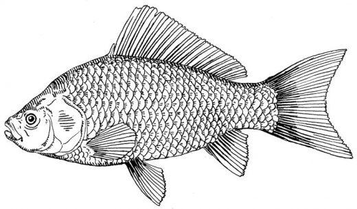 Beautiful HD Wallpapers 4 u Free Download: Cute Best Fish Drawing