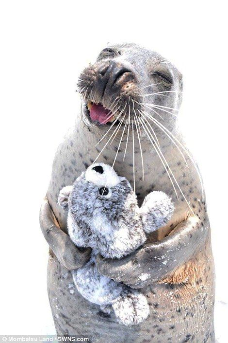 Smitten seal hugs a toy version of itself in pure joy