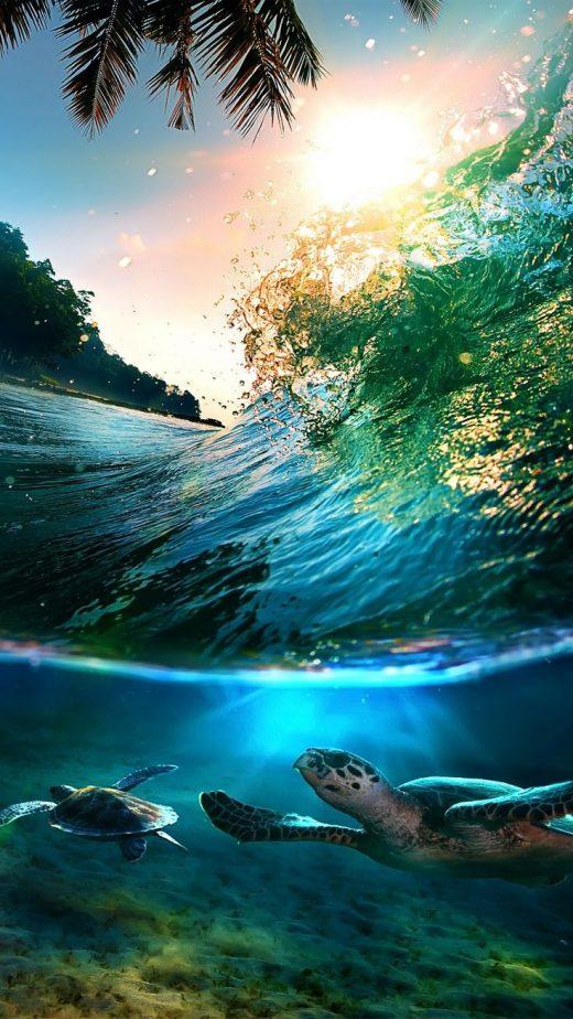 Tropical Sea Island Turtles HD Wallpaper Check more at phonewallp.com/…