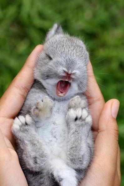 18 Photos Of Baby Animals Yawning (BECAUSE BABY ANIMALS YAWNING!)