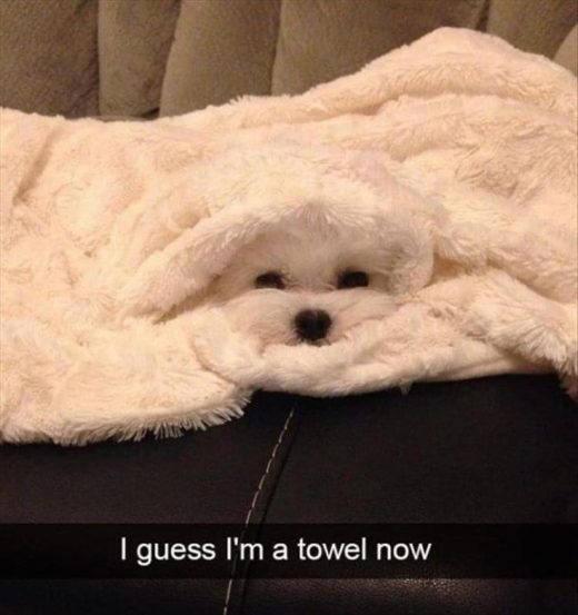 25+ Funny Animal Memes Of Today