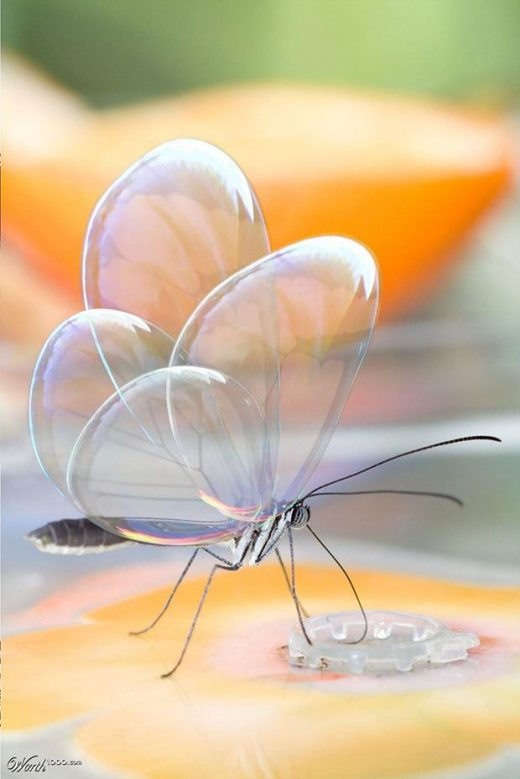 25 Most Beautiful Macro Photography examples for your inspiration and tips for beginners