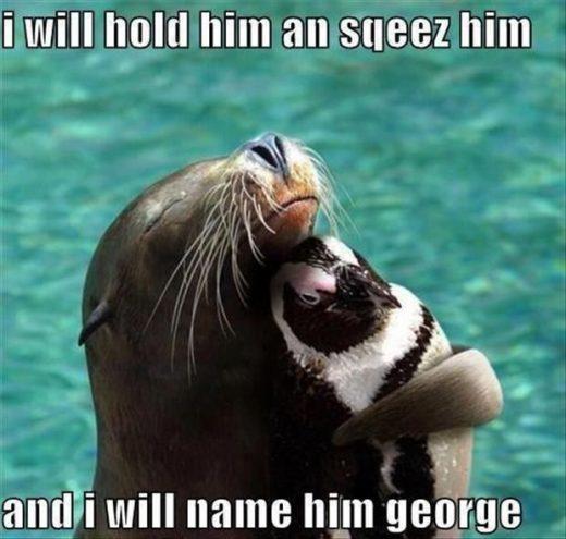 Animal Memes Of The Day 30 Pics – Ep26 #memes #animalmemes #lovelyanimalsworld -…
