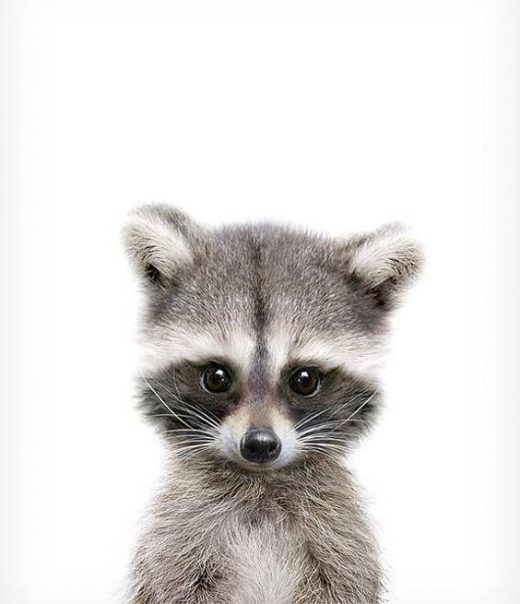 Nursery decor, Raccoon print, Woodland animals, PRINTABLE decor, Forest animal, Animal art, Baby animals, Woodland baby shower, Kids art