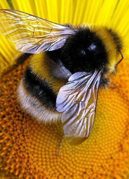 This 60 Second Timelapse Revealing The First 21 Days Of A Bee's Life Is Hypnotising