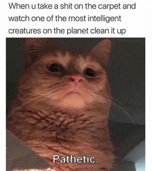 To 20 Funny Internet Animal Memes