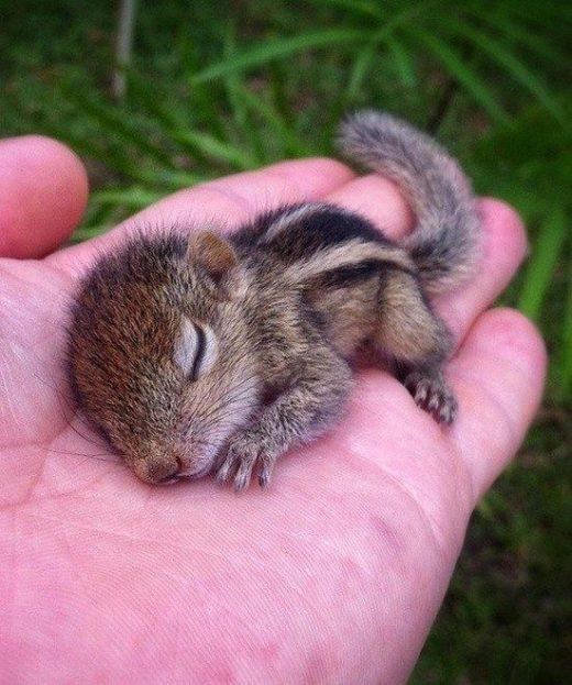 135+ Cute Baby Animal