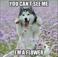 Funny Animal Memes Of The Day – 30 Pics Ep1