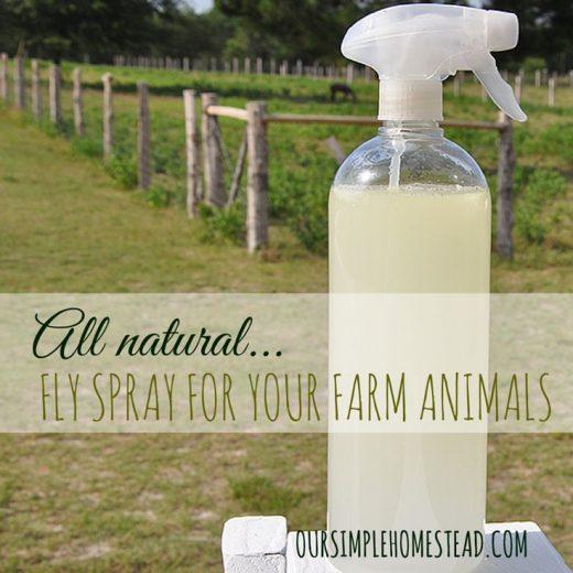 All Natural DIY Fly Spray For Livestock