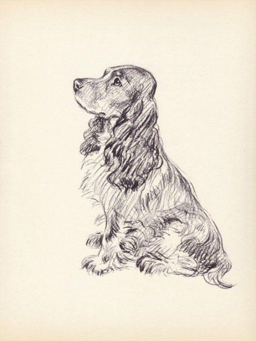 Antique Dog Print, 1930s Lucy Dawson Spaniel Print, Home Wall Decor, Interior Design, Art Illustration to Frame plate, black white brown B-1
