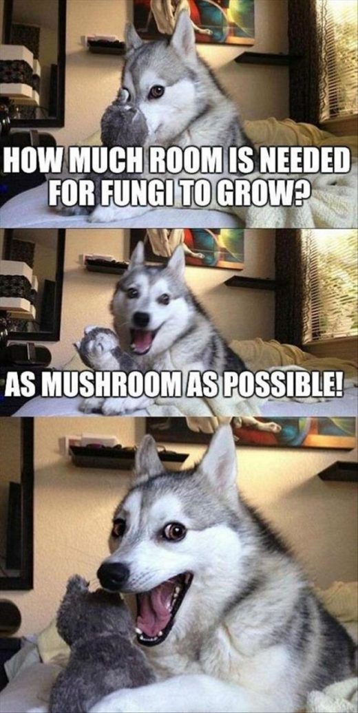 Funny Animal Picdump of The Day 136 (24 Photos)