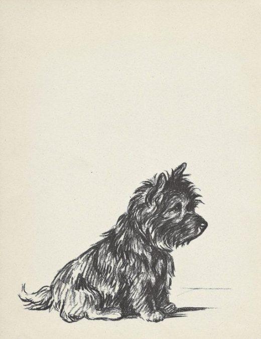 TERRIER Dog Print, Lucy Dawson,1930s Wall Decor, Wall Art Illustration, Pet Book plate, black & white, dachshund, cairn terrier, b-1