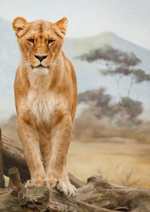 26 Breathtaking Wild Animals
