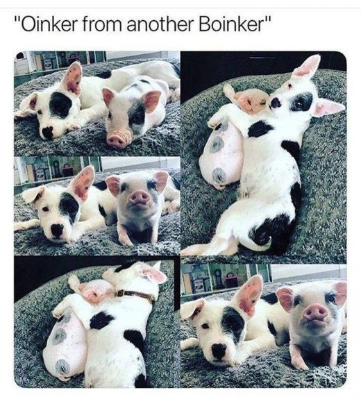 Dog Memes Of The Day 32 Pics – Ep28 #dogs #dogmemes #memes#lovelyanimalsworld …