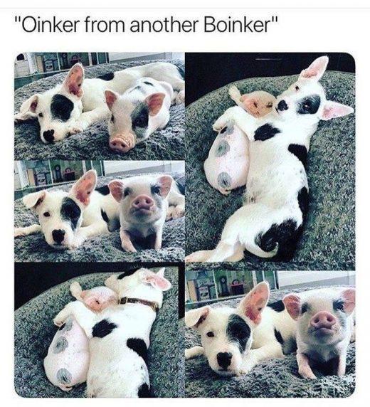 Dog Memes Of The Day 32 Pics – Ep28 #dogs #dogmemes #memes#lovelyanimalsworld …