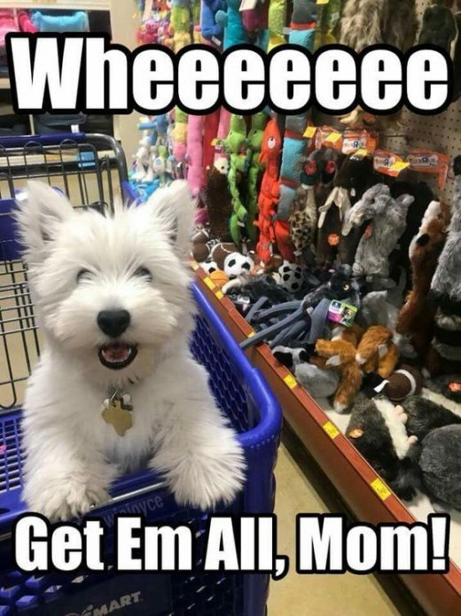 Dog Memes Of The Day 32 Pics – Ep30 #dogs #dogmemes #memes#lovelyanimalsworld …