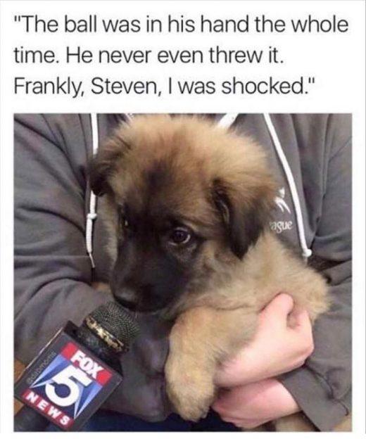 Dog Memes Of The Day 32 Pics – Ep38 #dogs #dogmemes #lovelyanimalsworld – Love…