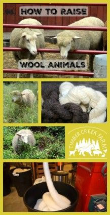 How to Raise Wool Animals for Yarn