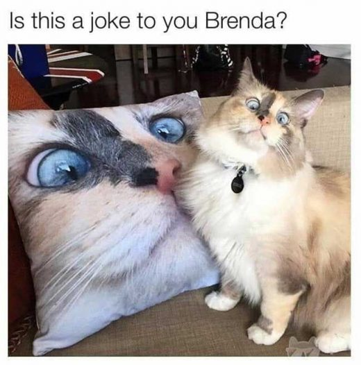 Latest 24 Funny Animal Pictures You Need to See Today