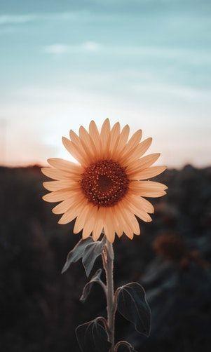 Your my sunshine in the rain