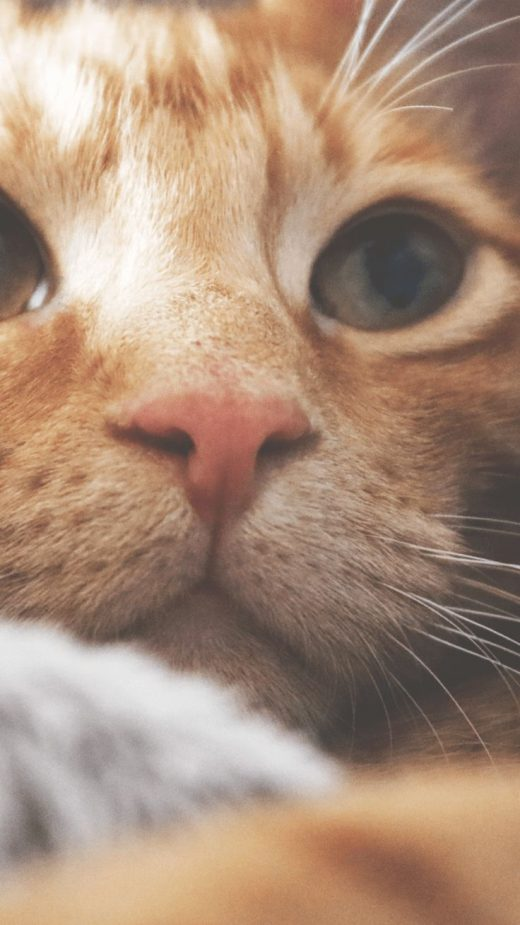 Mobile Cat Wallpapers – Android, iPhone, Smartphone HD Wallpapers