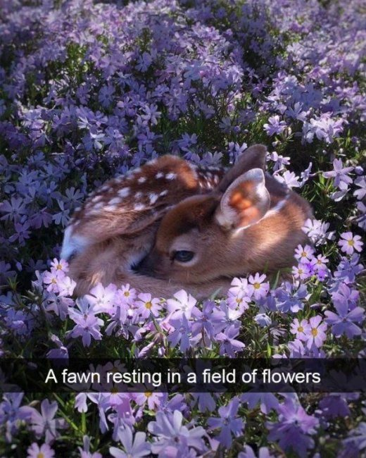 36 Of The Greatest Animal Snapchats Ever Snapped