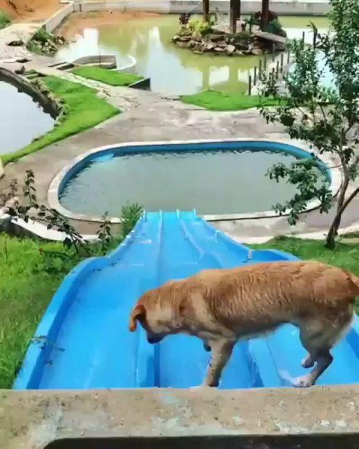 Cute Dog's Water Slide 😎