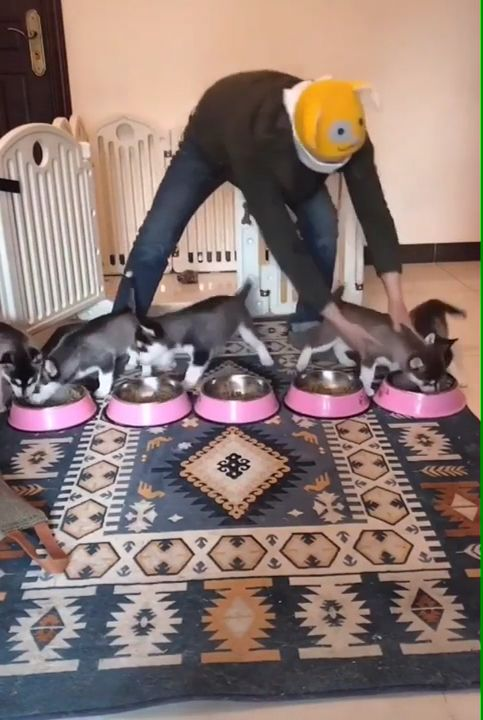 Funny Puppies Meal Time 😂