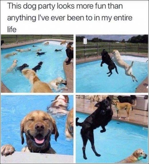 Funny Random Pics And Memes Dump – 40 Pictures