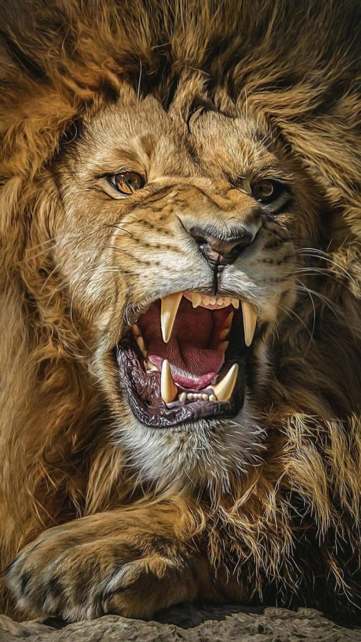 Great Lion Ultra Hd Wallpapers For Andriod Download In Link For Hd result