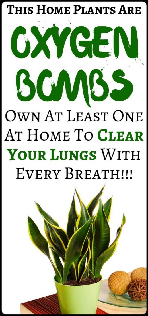 These plants are oxygen bombs. Own at least one to clear your lungs with every b…