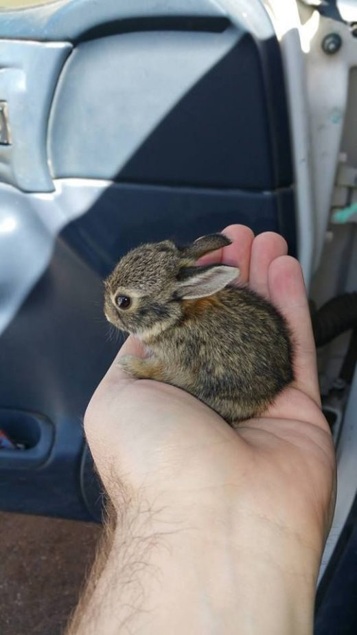 57 Teeny Baby Animals That You Will Love!