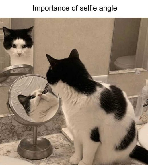 60 Try Not To Laugh Extremely Funny Animal Pictures To Make You LOL