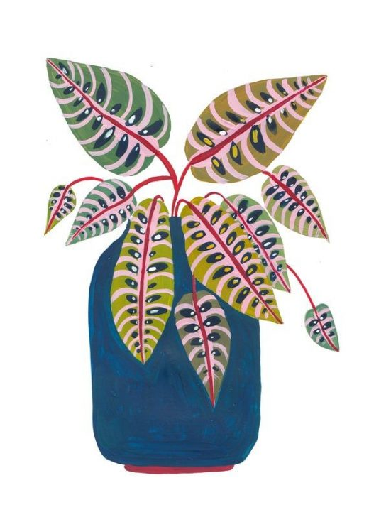 Botanical Print / Prayer Plant / Botanical Illustration / Home Decor / House Plants / Dorm Decor / Dorm Wall Art