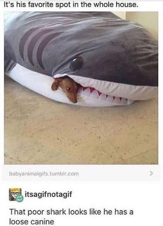 Dog Memes Of The Day 32 Pics – Ep50 #animalmemes #dogmemes #memes – Lovely Ani…