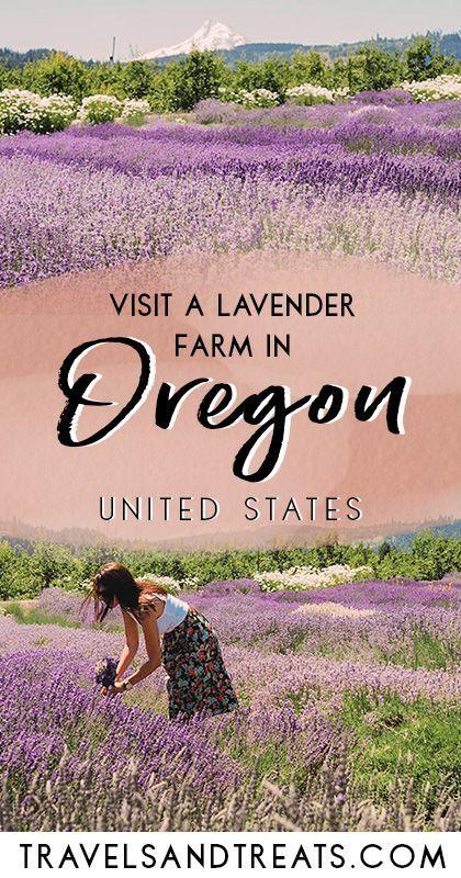 Portland, Oregon Day Trip: Hood River Lavender Farms