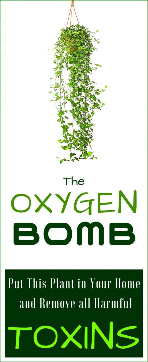 Protect Oneself: Set This Oxygen BOMB in Your Dwelling and Get rid of All Harmful Toxins