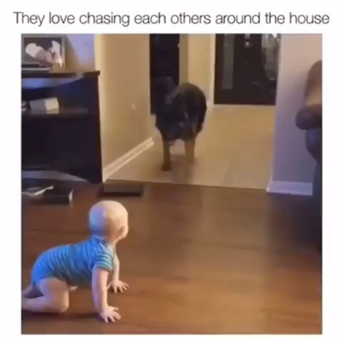 They love chasing each others around the house😂