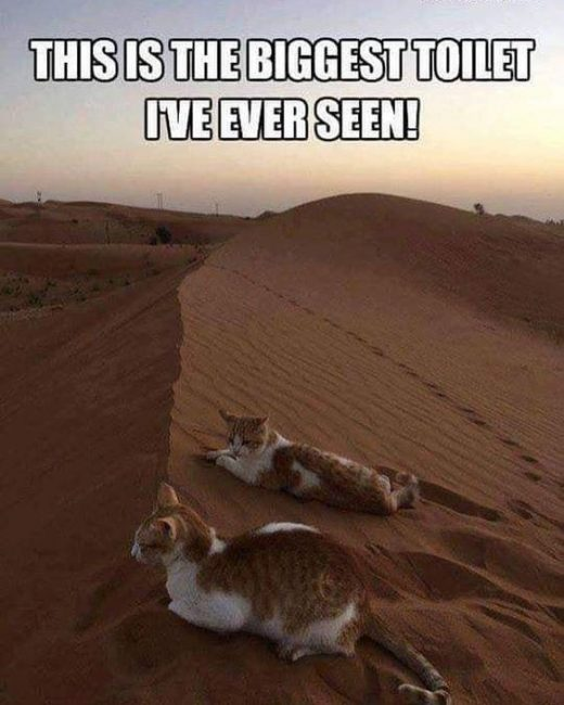 20 Funny Animals for Caturday and Beyond –