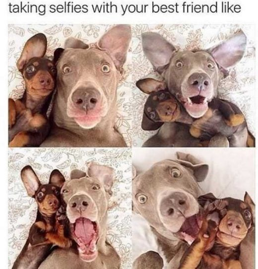 30+ Funny Doggo Memes That Will Get Your Tail Wagging