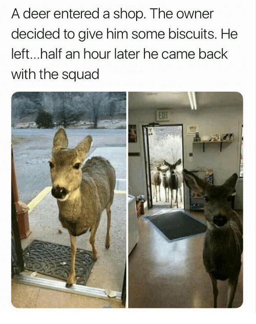 14 Times Animals Had The Best Time With Their Squad (Memes)