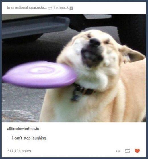22 Of The Funniest Animal Photos On Tumblr.