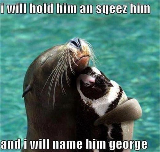 23 Funny Animal Pics –